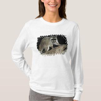 T-shirt Raton laveur du nord, lotor de Procyon, adulte à 2