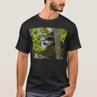 T-shirt Raton laveur rocheux
