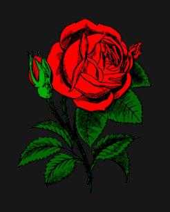 Vetements Mode Habits Dessin Rose Rouge Zazzle Be
