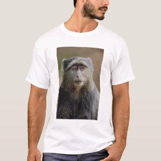 T-shirt Sykes ou singe bleu, mitis de Cercopithecus,