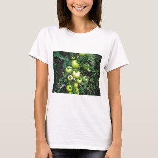 T-shirt Tomates organiques