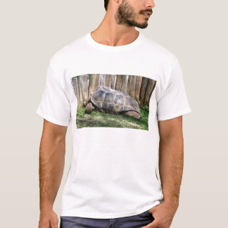 T-shirt Tortue géante