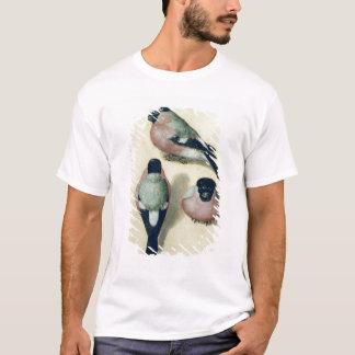 T-shirt Trois études d'un bouvreuil