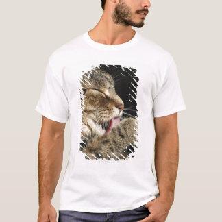 T-shirt Un chat tigré léchant sa patte