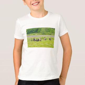T-shirt Vaches ceinturées à Galloway dans le pâturage