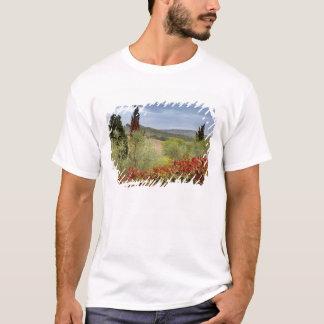 T-shirt Vignoble près de Montalcino, Toscane, Italie