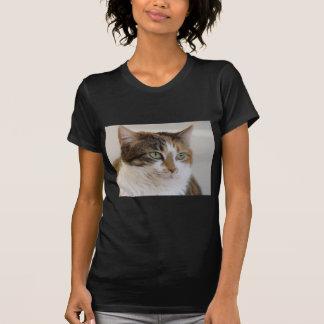 T-shirt Visage de chat tigré de calicot