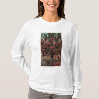 T-shirt Wenatchee, pommier de vallée de WAA Wenatchee