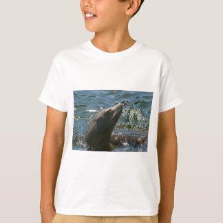 T-shirts d'otarie