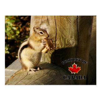 Tamia mangeant des champignons carte postale