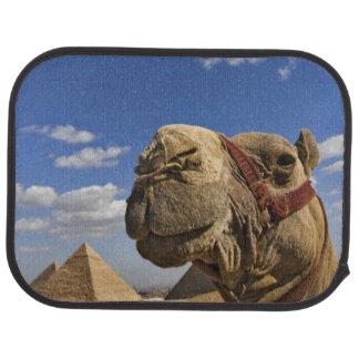 Tapis De Sol Chameau devant les pyramides de Gizeh, Egypte,