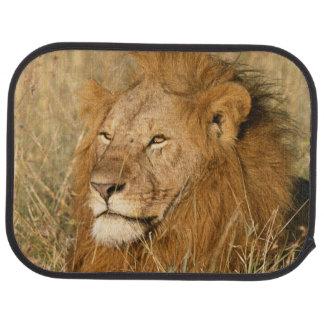 Tapis De Sol Lion de mâle adulte à la première lumière