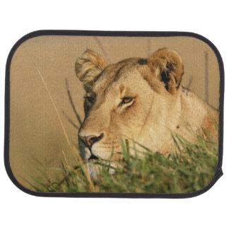 Tapis De Sol Lion femelle