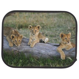 Tapis De Sol Petits animaux de lion sur le rondin, Panthera
