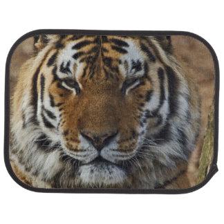 Tapis De Sol Tigre de Bengale, Panthera zoo du Tigre,
