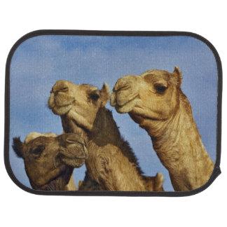 Tapis De Sol Trio des chameaux, marché de chameau, le Caire,