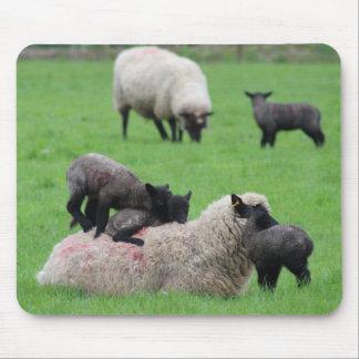 Tapis De Souris Agneau et moutons de ressort