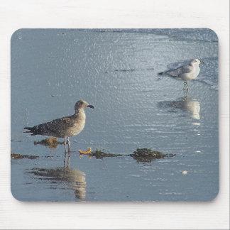 Tapis De Souris Animaux de faune de charadriidés d'oiseaux de