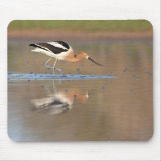 Tapis De Souris Avocette américaine adulte dans les étangs