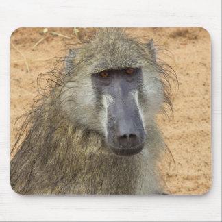Tapis De Souris Babouin de Chacma, Botswana, Afrique, Mousepad