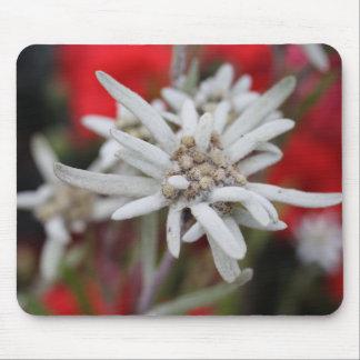 Tapis De Souris Beau nivale de Leontopodium d'edelweiss