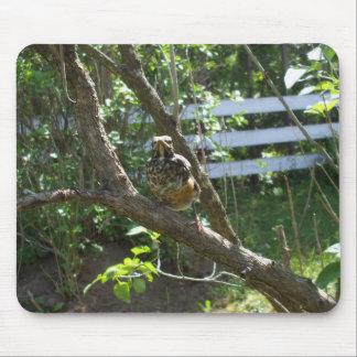 Tapis De Souris Bébé Robin sur la branche