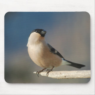 Tapis De Souris Bullfinch Pfaff de cathédrale (Pyrrhula pyrrhula)