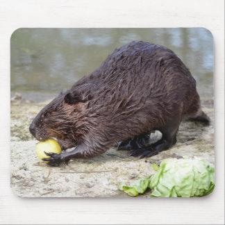 Tapis De Souris Castor nord-américain mangeant la pomme