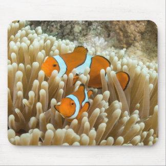 Tapis De Souris Clownfish mignon sur la Grande barrière de corail