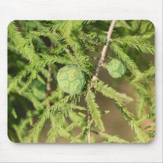 Tapis De Souris Cône de graine de Cypress chauve