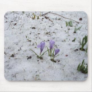 Tapis De Souris Crocus pourpre dans la neige