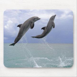 Tapis De Souris Dauphins   Delfin (Tuemmler plus brut)