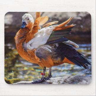 Tapis de souris de canard de mandarine