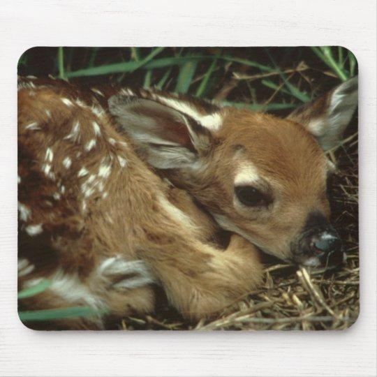 Tapis de souris de cerfs communs de bébé