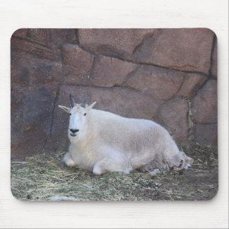 Tapis de souris de chèvre de montagne rocheuse