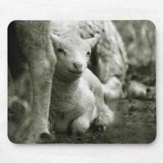 Tapis De Souris Doux comme un agneau / Gentle as a lamb ...