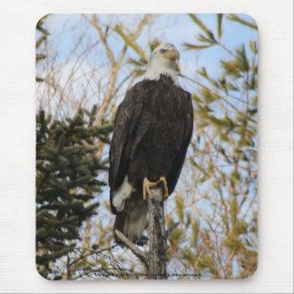 Tapis De Souris Eagle 2