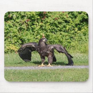 Tapis De Souris Eagle chauve juvénile