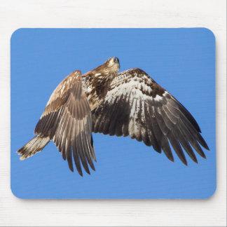 Tapis De Souris Eagle chauve juvénile en vol