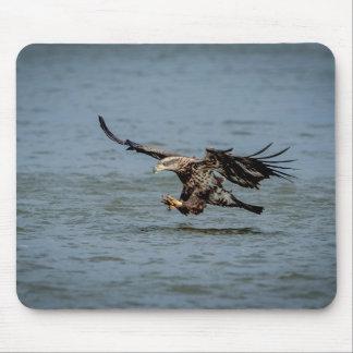 Tapis De Souris Eagle chauve non mûr plongeant pour un poisson