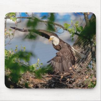Tapis De Souris Eagle chauve partant du nid