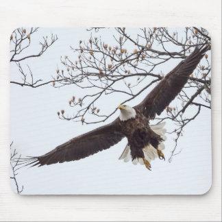 Tapis De Souris Envergure d'Eagle chauve