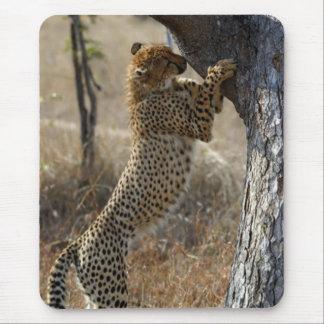 Tapis De Souris Escalade de guépard sur l'arbre