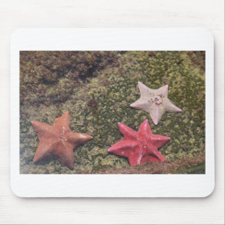 Tapis De Souris Étoiles de mer vivantes (4).JPG