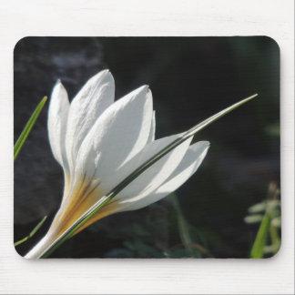Tapis De Souris Fleurs sauvages