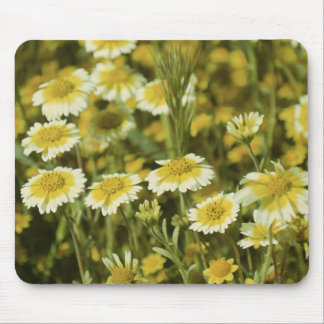 Tapis De Souris Fleurs sauvages jaunes et tournesols blancs