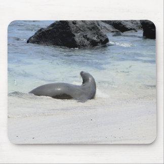 Tapis De Souris fur in the seal water