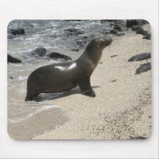 Tapis De Souris fur of the seal Tortues d'eau douce