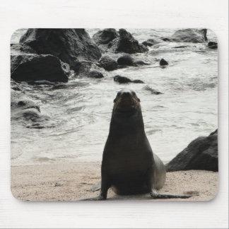 Tapis De Souris fur on the seal beach