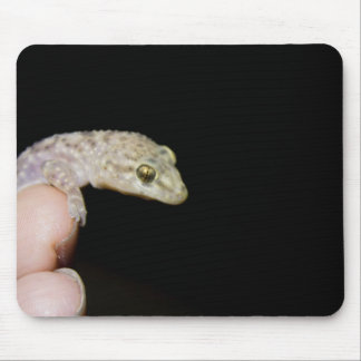 Tapis De Souris Gecko méditerranéen